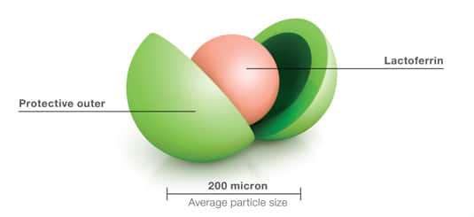 Inferrin molecule diagram